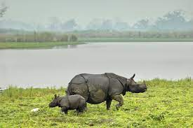 Kaziranga National Park: Home to One-Horned Rhinoceros