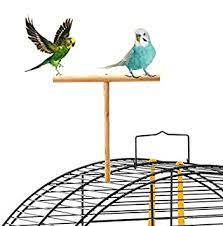 Best Perches For Birds To Buy On Amazon